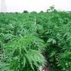 Pesë deputetë, të implikuar në grupin e trafikut të drogës